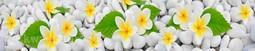 Кухонный фартук пластик Тропические цветы